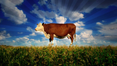 Cover for: Bien se nourrir et préserver la planète